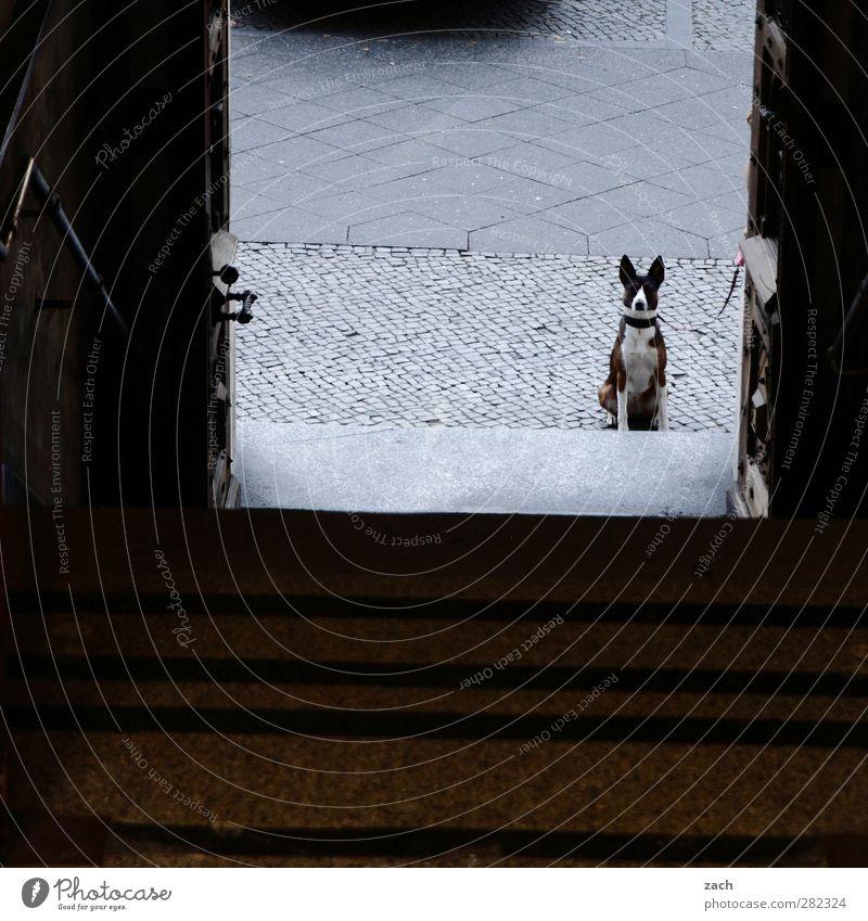 Sitzgelegenheit   ... müssen draußen bleiben Hund Tier Haus Straße Wege & Pfade grau Tür Treppe sitzen warten beobachten Haustier hocken Tierliebe