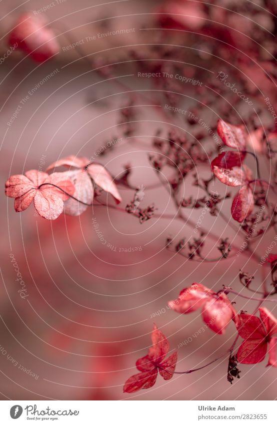 Verblühte Hortensien Wellness Meditation Spa Trauerkarte Trauerfeier Beerdigung Natur Pflanze Herbst Winter Blume Sträucher Blüte Kletterhortensie