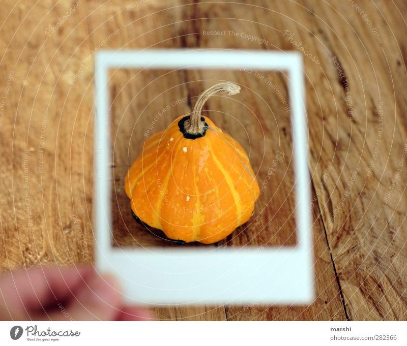 Kürbiszeit II Lebensmittel Gemüse Ernährung Essen orange Kürbisgewächse Polaroid Fahrradrahmen Rahmen Holztisch essbar Halloween Farbfoto Innenaufnahme