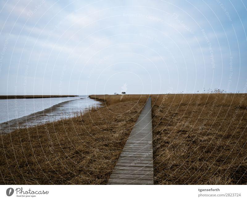 Siel am Kiekkasten Himmel Ferien & Urlaub & Reisen Natur Pflanze Wasser Landschaft Meer Haus Wolken Winter Ferne Strand Küste Freiheit Sand Ausflug