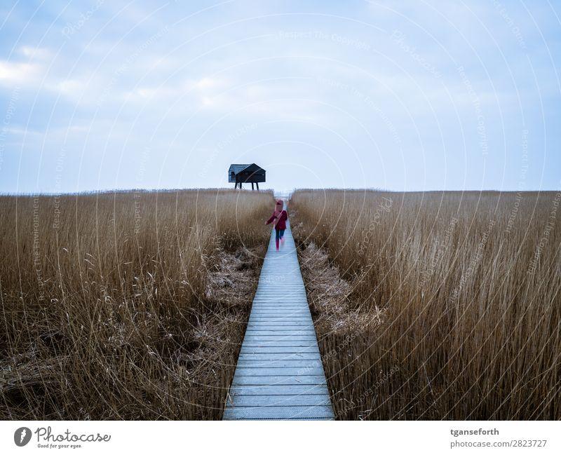Rennen zum Meer Ferien & Urlaub & Reisen Ausflug Abenteuer Ferne Freiheit Natur Landschaft Pflanze Wolken Horizont Wildpflanze Wiese Küste Nordsee Dollart Hütte
