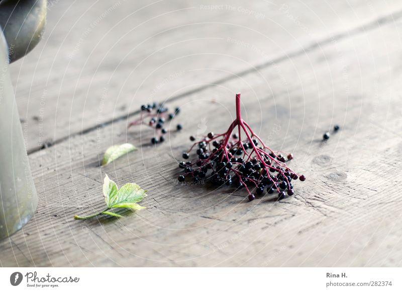 HerbstStill V [up-side-down] Frucht Blatt alt fallen verblüht dehydrieren authentisch natürlich Vergänglichkeit Wandel & Veränderung Fliederbeeren