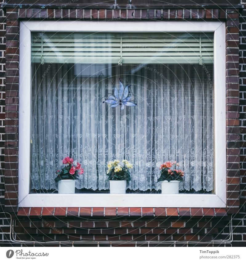 Langeoog Window Haus Fenster Autofenster Ordnung trist Backstein Quadrat Haushalt Gardine Spitze Blumentopf Spießer Jalousie aufräumen Ordnungsliebe