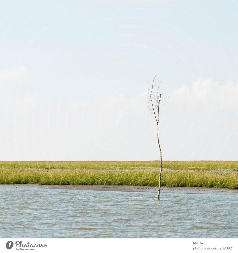 Alleinstehend Natur Wasser Pflanze Baum ruhig Landschaft Umwelt Ferne Küste klein Luft leer einzeln dünn Nordsee