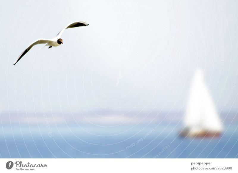 double sailing Freizeit & Hobby segeln Ferien & Urlaub & Reisen Tourismus Ausflug Sommer Meer Wellen Wassersport Himmel Schönes Wetter Küste Nordsee Ostsee