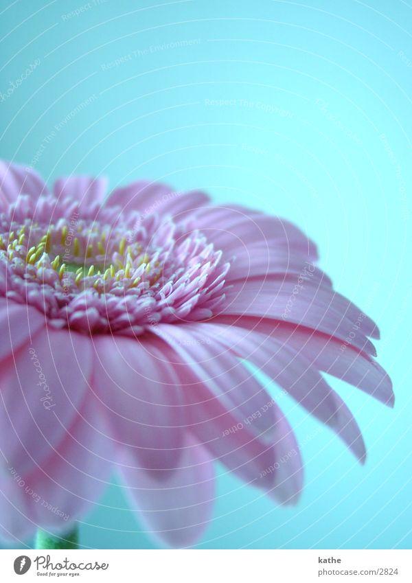 blüm Blume rosa Freizeit & Hobby hell-blau
