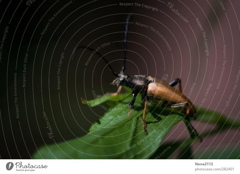 Sitzgelegenheit | für leichtgewichtige Wesen... Natur grün Sommer Pflanze Tier Blatt Wald dunkel Herbst klein gold Käfer