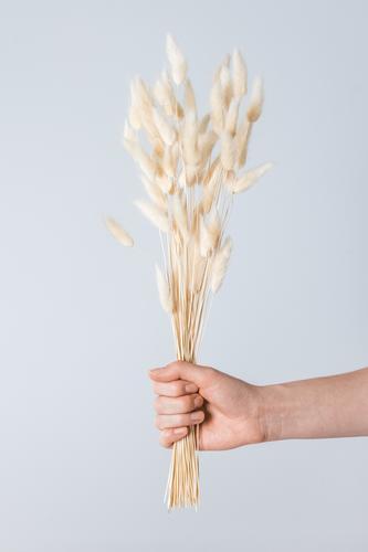Hand hält einen Blumenstrauß aus Grasähren. schön Haut Kosmetik Mensch Frau Erwachsene Arme Finger Umwelt Natur Pflanze natürlich wild weich gelb gold grau