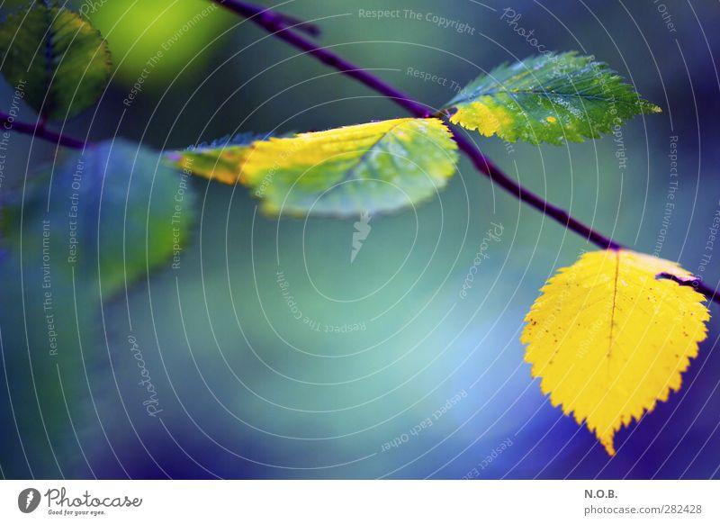 Herbstlich Farbig Natur blau Pflanze Blatt ruhig Umwelt gelb Leben Herbst natürlich hängen Überleben