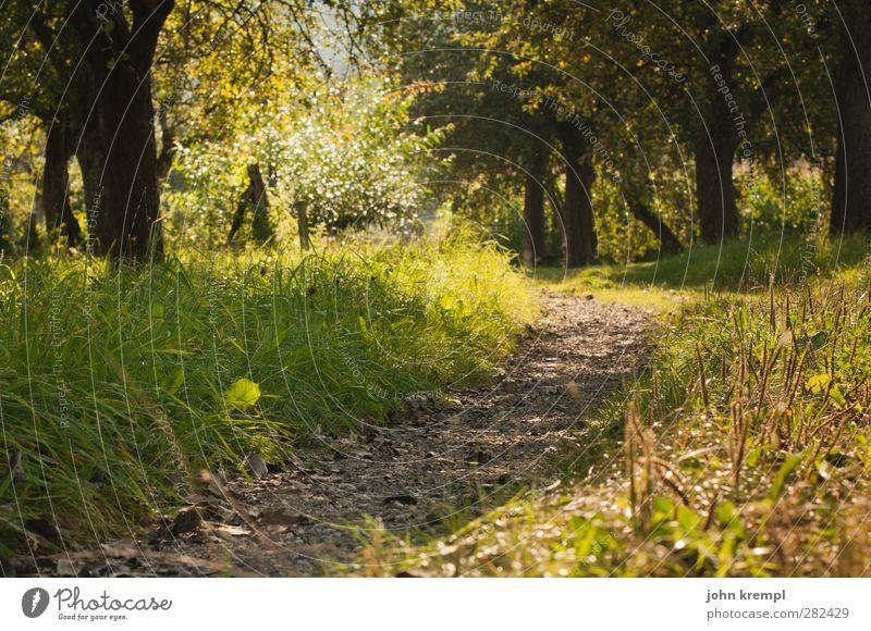 Schwitzgelegenheit Natur grün Baum gelb Umwelt Wiese Gras Wege & Pfade Garten braun Park Zufriedenheit Wachstum Zukunft Idylle Alpen