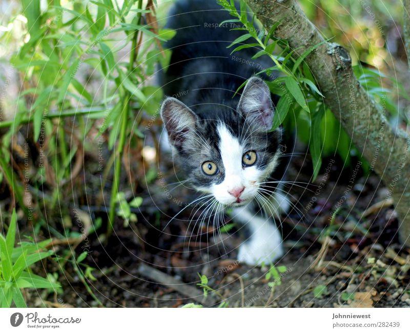 Erwischt Katze geheimnisvoll Tiergesicht Jagd Momentaufnahme gefangen Intuition