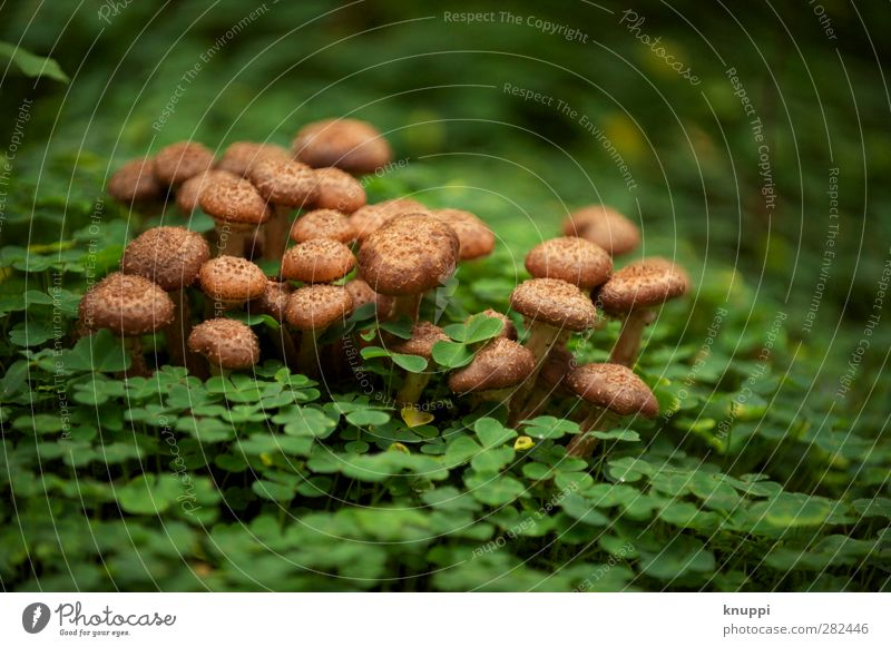 eingebettet in grün-Sitzgelegenheit für Käfer Natur Pflanze schön Erholung Blatt ruhig Wald schwarz Umwelt Herbst braun Park wild Wetter leuchten