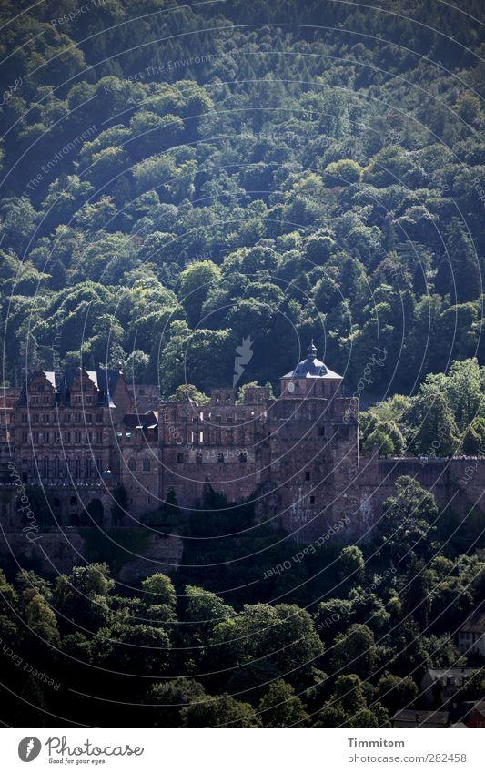 Heidelbergkuchen zum Feiertag Tourismus Umwelt Natur Landschaft Baum Wald Burg oder Schloss Heidelberger Schloss Blick ästhetisch fest braun grün Gefühle