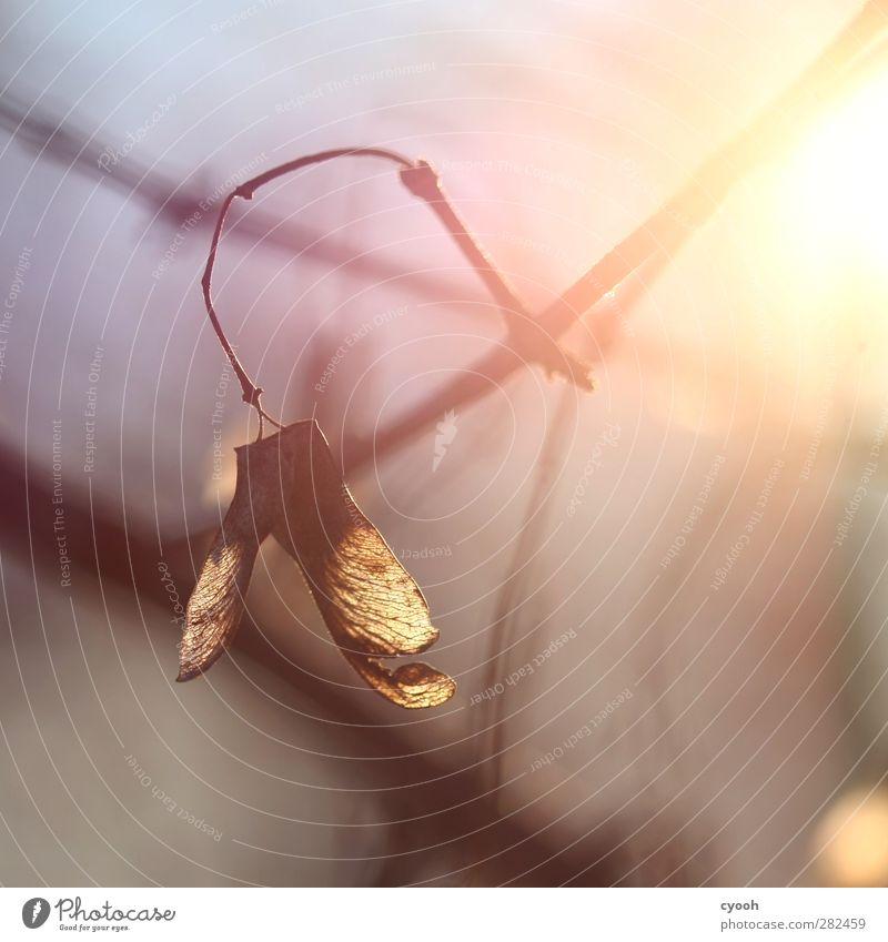 Licht Natur alt Ferien & Urlaub & Reisen Pflanze Baum rot gelb kalt Herbst hell braun fliegen gold Wachstum Energie leuchten