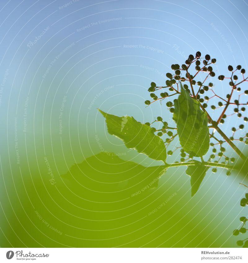 """""""Oh Oh... Jetzt wird er groß, grün und böse!"""" Himmel Natur blau Pflanze Blatt Nutzpflanze"""