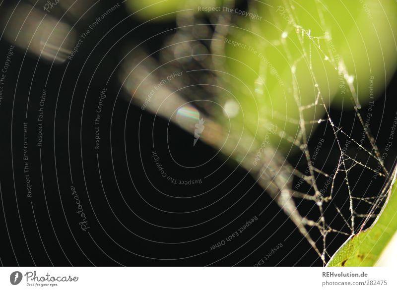 """"""" Ich arbeite für den größten Spinner aller Zeiten."""" Natur grün Pflanze Tier Blatt schwarz Spinne Spinnennetz"""