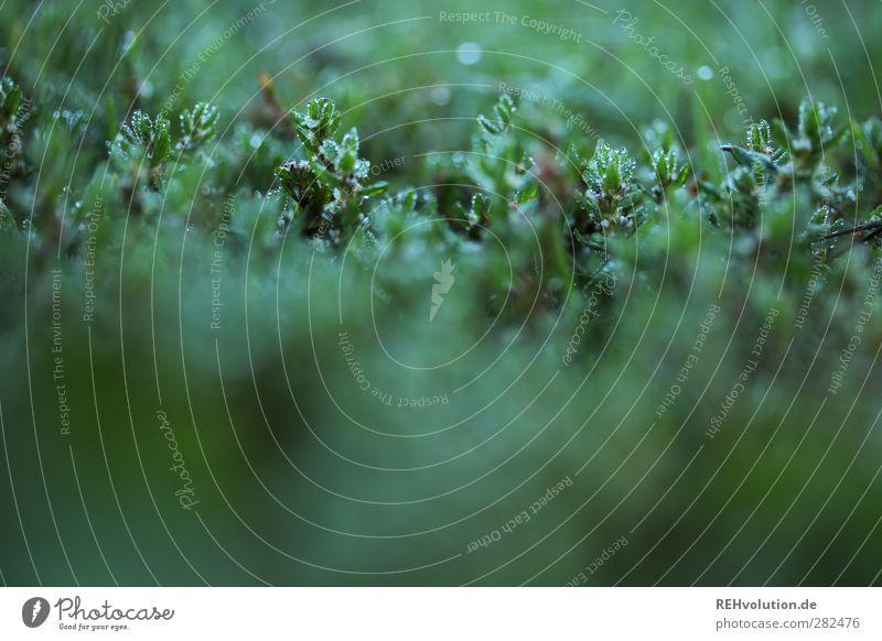 """""""Winzig kleiner Lebensraum!"""" Natur Pflanze Blatt Grünpflanze Wildpflanze grün Farbfoto Gedeckte Farben Nahaufnahme Detailaufnahme Makroaufnahme Unschärfe"""