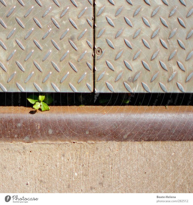 Wo ein Wille ist grün Pflanze Einsamkeit Wege & Pfade Metall braun außergewöhnlich Kraft ästhetisch Dekoration & Verzierung gut Industrie bedrohlich einzigartig