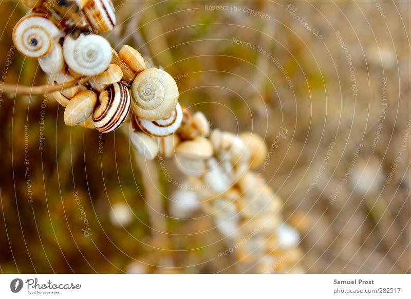 snail Natur Tier Erholung gelb oben klein braun Zusammensein orange gold Abenteuer Tiergruppe einzigartig Ziel nah Gelassenheit