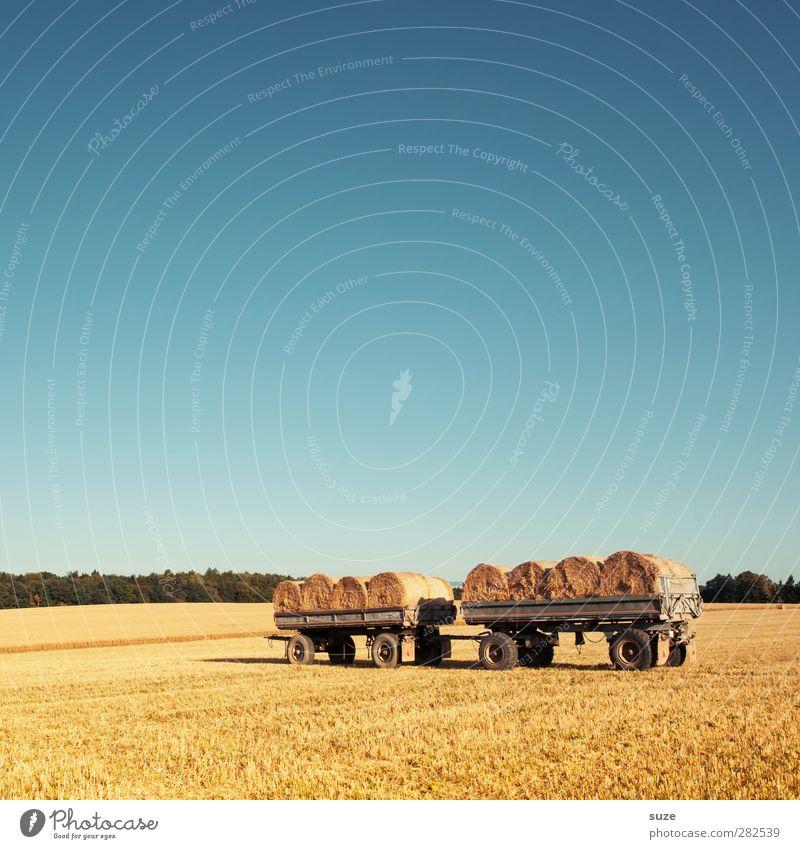 Bestellt und nicht abgeholt. Himmel Natur blau Sommer Landschaft gelb Umwelt Wärme Horizont natürlich Feld authentisch paarweise Schönes Wetter Landwirtschaft