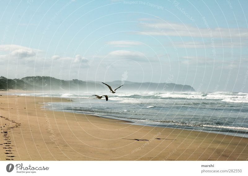 Sehnsucht Natur Landschaft Sand Wasser Himmel Frühling Sommer Wellen Küste Strand Bucht Vogel 2 Tier blau braun Meer Möwe Südafrika Ferne wellig