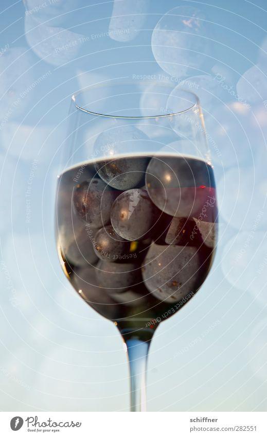 Himmelstropfen blau Frucht Glas Lebensmittel Ernährung Getränk Wein Wein genießen Lebensfreude Flüssigkeit Alkohol Weinberg Weintrauben Weinglas Rotwein