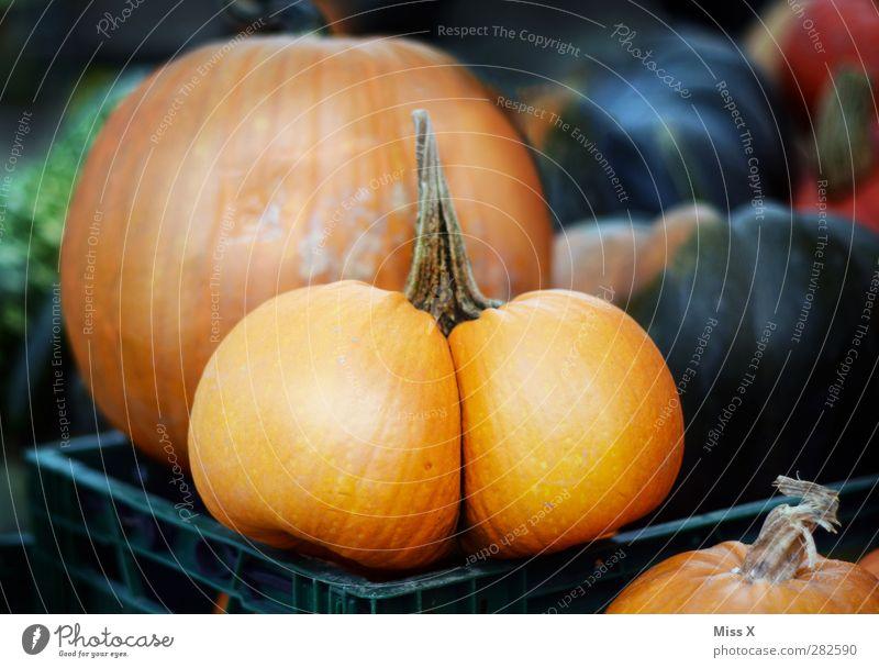 ...Popo Lebensmittel Gemüse Ernährung Bioprodukte Vegetarische Ernährung Gesäß dick rund lustig Kürbis Wochenmarkt Gemüsemarkt orange Halloween lecker
