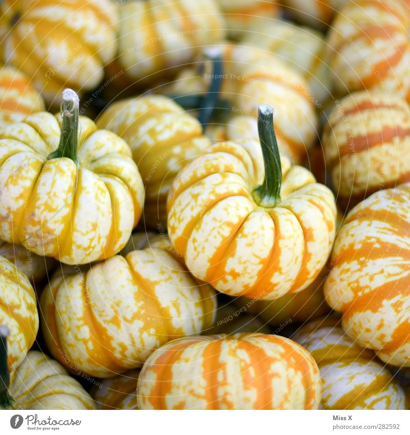 Halloween gelb Gesundheit orange Lebensmittel frisch rund Gemüse lecker Stengel dick Bioprodukte Kürbis Vegetarische Ernährung Kürbiszeit Wochenmarkt