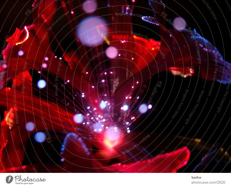 blumenlampe02 Blume rot Farbe Lampe Stimmung Fototechnik