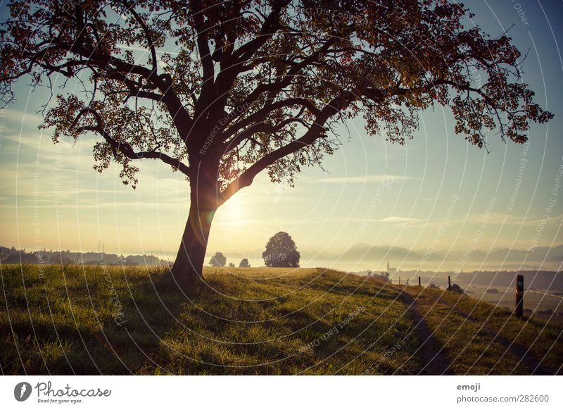 Hügel Umwelt Natur Landschaft Himmel Herbst Schönes Wetter Nebel Baum Wiese Feld natürlich grün Farbfoto Außenaufnahme Menschenleer Morgen Morgendämmerung