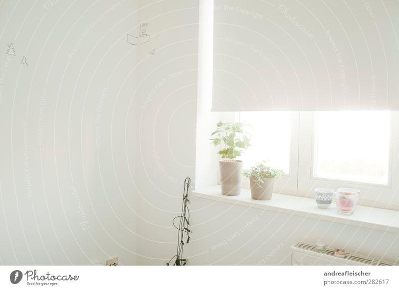 im raum der weißen schatten. Haus hell ruhig Lichterkette Rollo Wand Innenarchitektur Wohnung Pflanze Blumentopf Heizung Teelicht Grafik u. Illustration