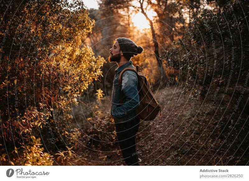 Eine Person, die den Herbstbaum betrachtet. Mann Tourist Wald Blick Baum Porträt Tourismus Ferien & Urlaub & Reisen Abenteuer Jugendliche Ausflug Reisender