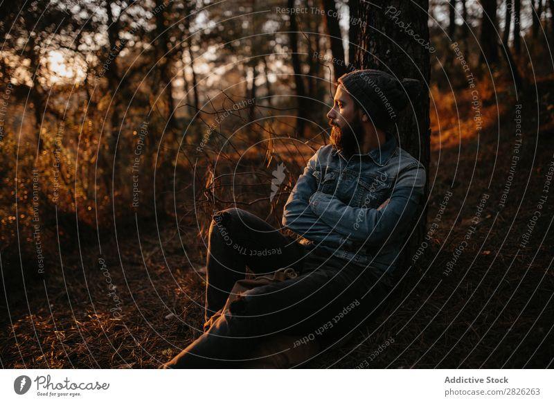 Mann im Wald bewundert Sonnenuntergang Mensch ruhen sitzen Tourist Blick Baum Porträt Herbst Jugendliche ländlich Natur Erholung stumm Ferien & Urlaub & Reisen