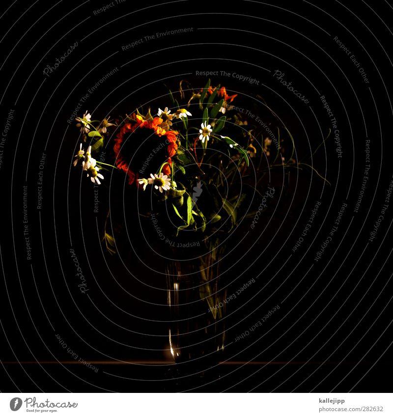oktober Umwelt Natur Pflanze Blume Gras Grünpflanze Wildpflanze Wiese Blühend Sonnenblume Vase Blumenvase Blüte Herbst verblüht Jahreszeiten dunkel Lichtspiel