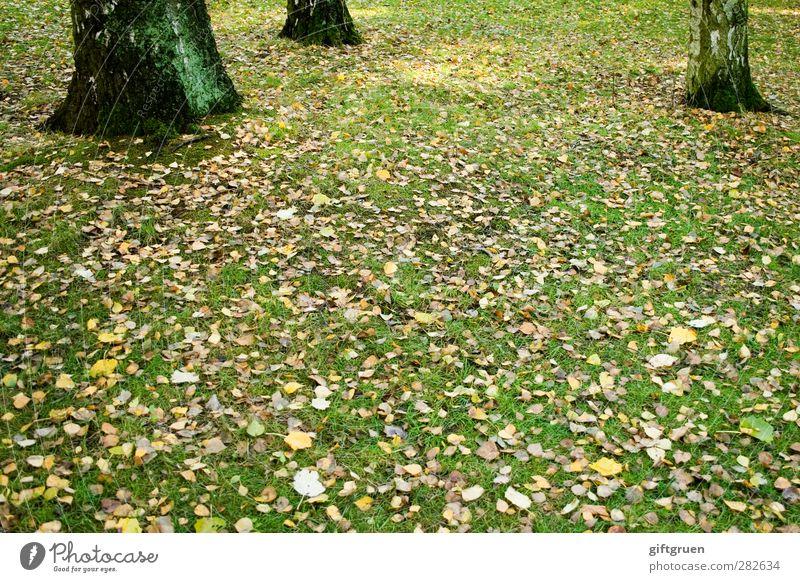 altweibersommer Umwelt Natur Pflanze Herbst Schönes Wetter Baum Gras Blatt Grünpflanze Wiese liegen herbstlich mehrfarbig fallen Baumstamm Sonnenlicht Baumrinde
