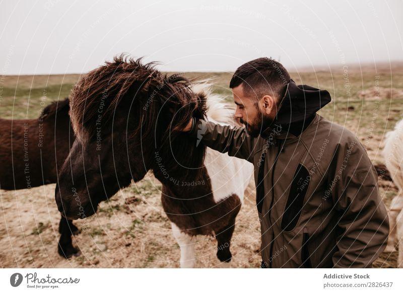 Mann streichelt Pferd Kraulen Island Großgrundbesitz Landwirtschaft Streicheln Landschaft
