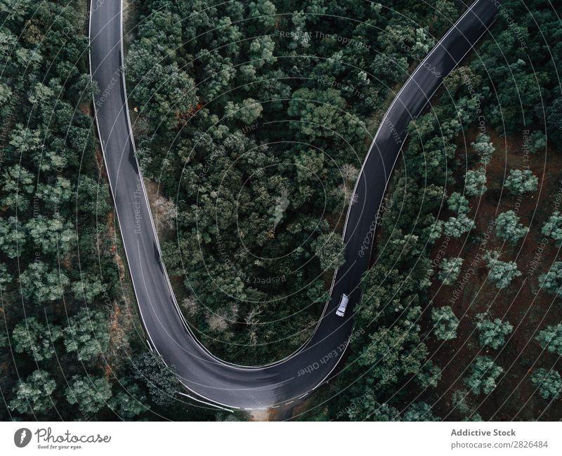 Luftaufnahme einer Straße durch einen Wald Fluggerät luftgestützt alpin Herbst herbstlich schön Vogelauge nadelhaltig Tag Dröhnen ökologisch Ökosystem Umwelt