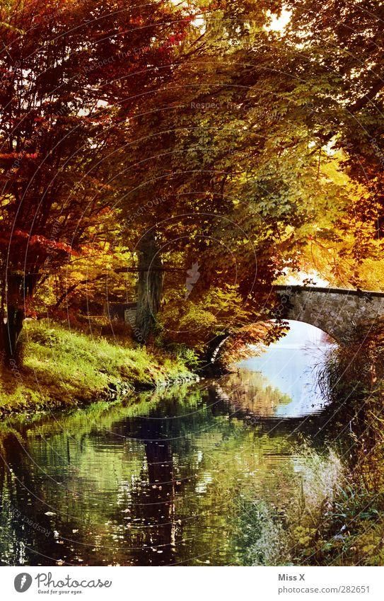 Herbst Natur Landschaft Baum Sträucher Park Bach Brücke mehrfarbig Herbstlaub herbstlich Herbstfärbung Herbstbeginn Herbstwald Herbstlandschaft Laubwald Blatt