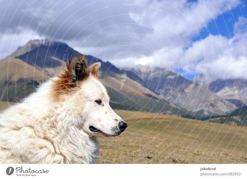 Weggefährte Hund Himmel Natur Einsamkeit Wolken Berge u. Gebirge Freiheit Felsen Abenteuer Gipfel Fell Tiergesicht Hochgebirge Hundeschnauze Hundeblick