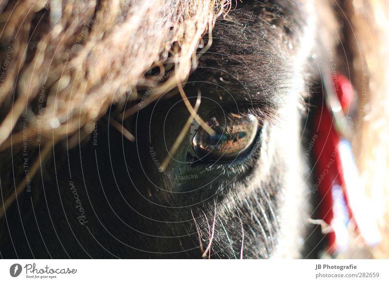 Seelenleben Sonne rot ruhig Tier schwarz Liebe Auge Glück braun Freundschaft Zufriedenheit Lebensfreude beobachten Pferd Vertrauen Wachsamkeit