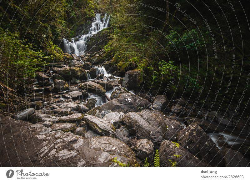 Wasserfall im Wald - Torc Waterfall Ferien & Urlaub & Reisen Tourismus Ausflug wandern Landschaft Felsen Europa Sehenswürdigkeit nass natürlich wild grün Idylle