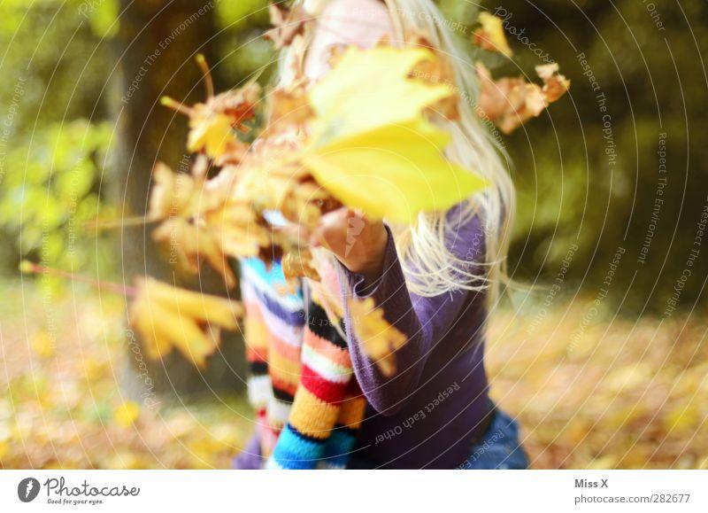 Herbststurm Mensch Jugendliche Freude Blatt Wald Erwachsene gelb feminin 18-30 Jahre Park blond Wind Fröhlichkeit Schönes Wetter positiv