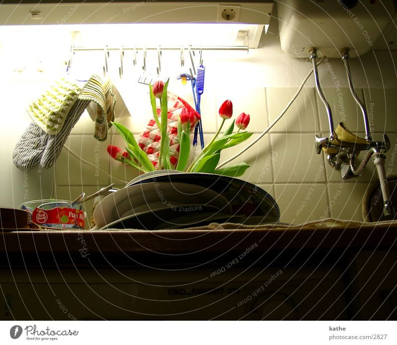 abspültulpen Blume Küche Dinge Teller Tulpe Schnuller Topflappen