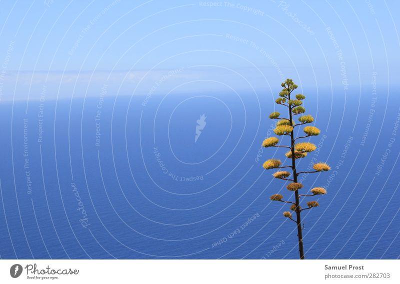 tree exotisch Sommer Meer Natur Wasser Himmel Horizont Schönes Wetter Pflanze Baum Kaktus Unendlichkeit blau gelb Einsamkeit einzeln Farbfoto Außenaufnahme