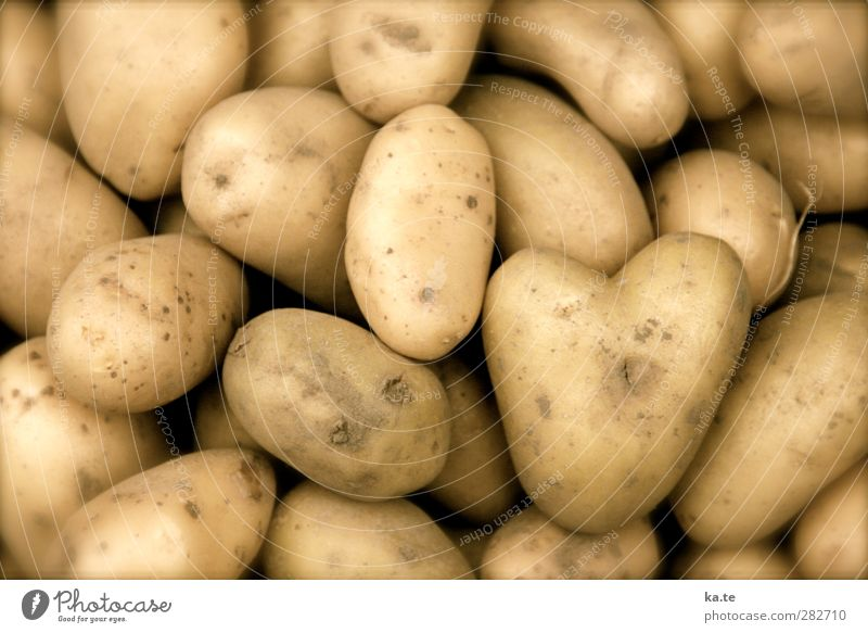 Herzlichen Ernte-Dank! gelb Liebe Gefühle Essen Gesundheit Lebensmittel braun Erde gold Ernährung Landwirtschaft Gemüse lecker Bioprodukte