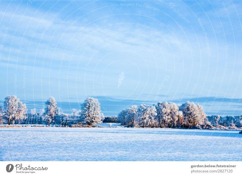 ganz in Weiß Himmel Natur Pflanze blau weiß Baum Wolken Schnee Glück braun grau glänzend Fröhlichkeit genießen Hügel Unendlichkeit