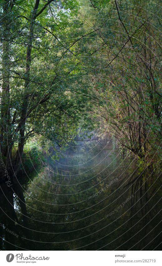 lautloser Übergang Umwelt Natur Landschaft Pflanze Wasser Baum Sträucher Bach dunkel natürlich Reflexion & Spiegelung Märchenwald Märchenlandschaft mystisch
