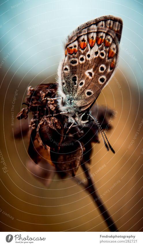 The Butterfly Natur Tier Wildtier Insekt Schmetterling
