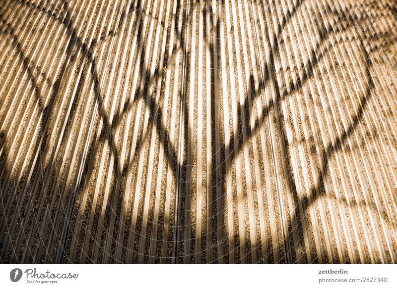 Schatten an einer Wand Baum Herbst Frühling Textfreiraum Mauer Fassade Linie Perspektive Ast Beton Baumstamm Zweig Fuge parallel