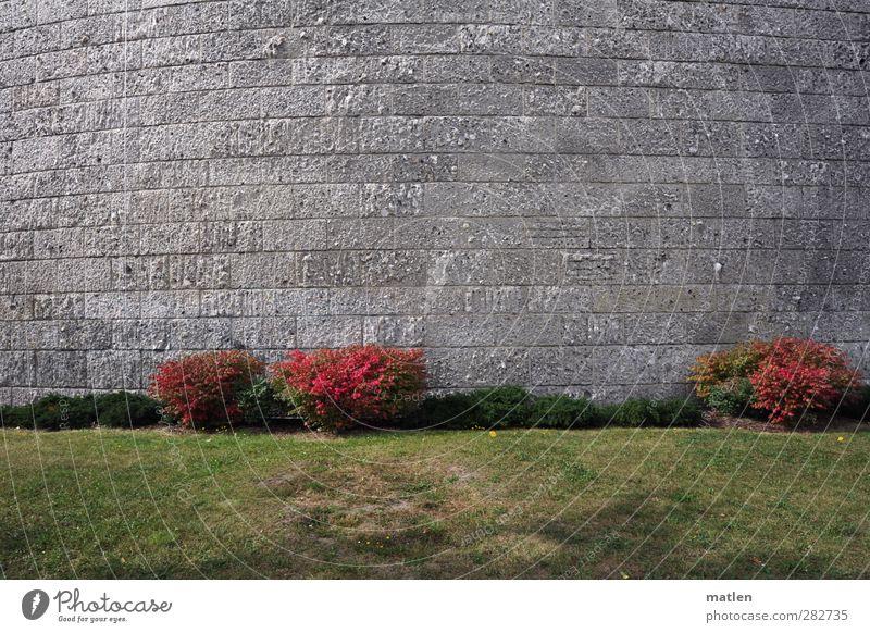 Erröten grün rot Wand Gras grau Mauer Stein Fassade Sträucher Bauwerk Scham
